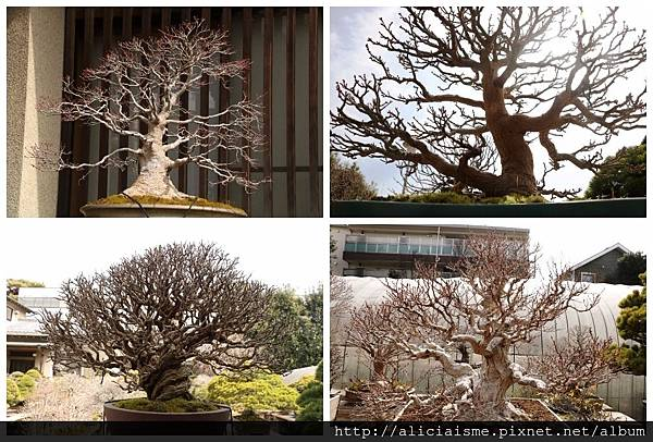 makephotogallery.net_1489904698.jpg