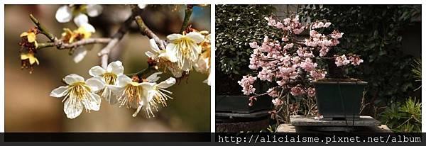 makephotogallery.net_1489904771.jpg