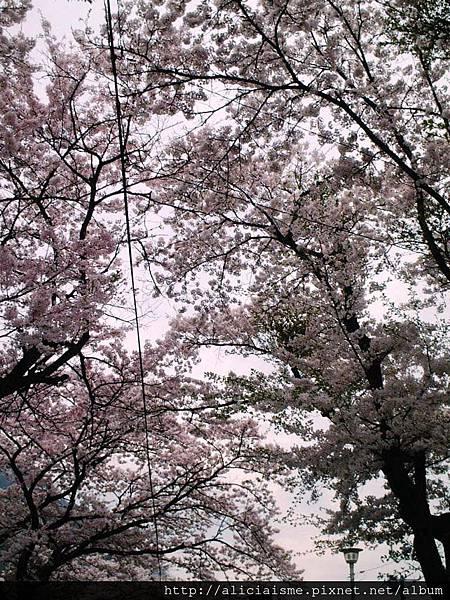 鬼怒川公園前6.JPG