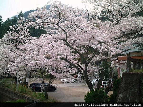溫泉神社3.JPG