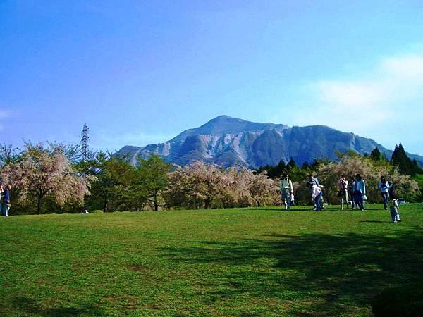 秩父羊山公園 (1).JPG