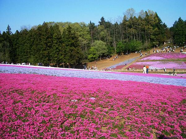 秩父羊山公園 (6).JPG