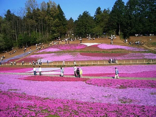 秩父羊山公園 (12).JPG