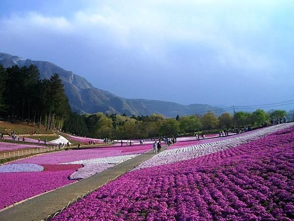 秩父羊山公園 (63).JPG