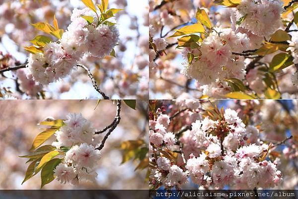 makephotogallery.net_1494148620.jpg