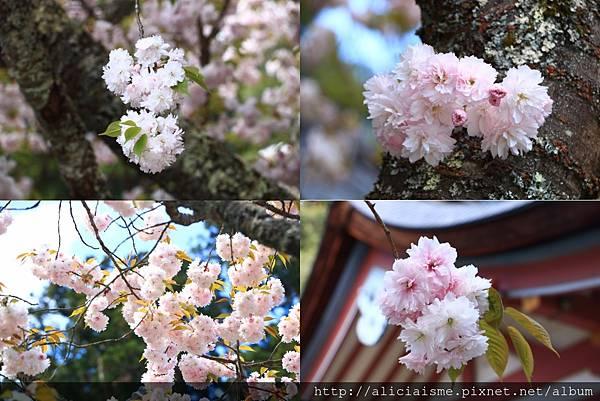 makephotogallery.net_1494148707.jpg
