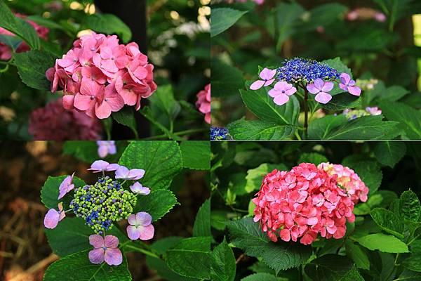 makephotogallery.net_1496374611.jpg
