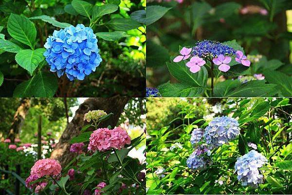 makephotogallery.net_1496374717.jpg