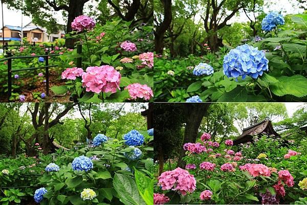 makephotogallery.net_1496374862.jpg