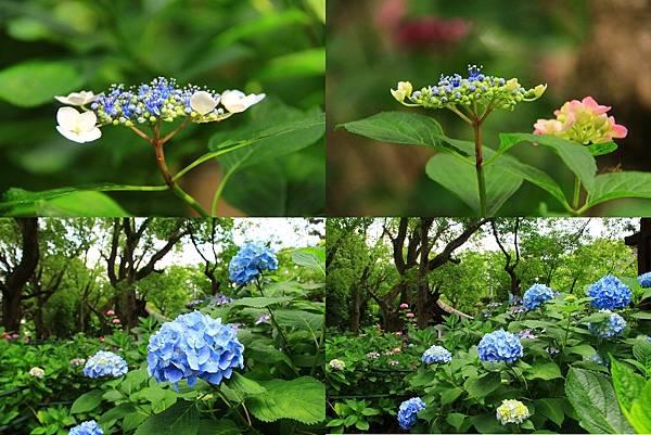 makephotogallery.net_1496375015.jpg