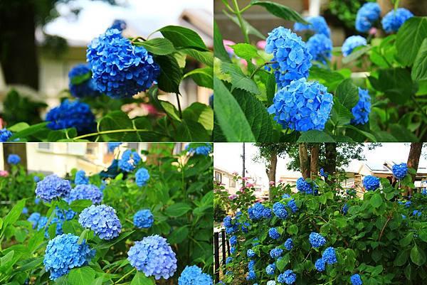 makephotogallery.net_1496375963.jpg