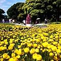 batch_江の島サムエルコッキング苑 (3).JPG