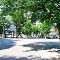 batch_P1170140.JPG