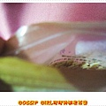 P1020110_1.jpg