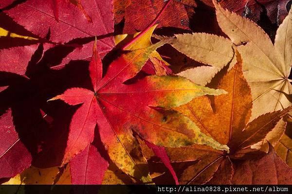 天然精油迎來秋天氣息