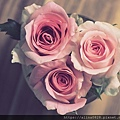 玫瑰精油有助於改善經前症候群
