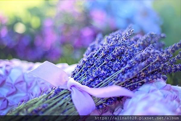 lavender-2482374_1280.jpg