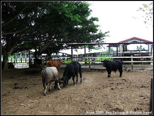 『台東』卑南‧初鹿牧場二訪