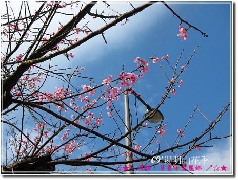 2009‧陽明山花季