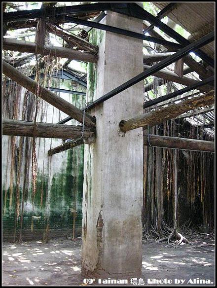 『2009環島行』台南‧盤根錯結、時光的回想‧安平樹屋
