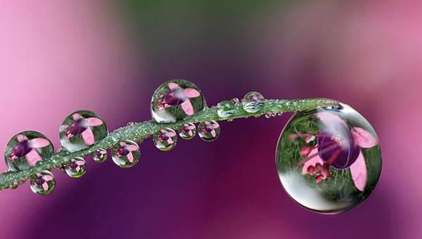 花與露珠2