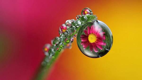 花與露珠4