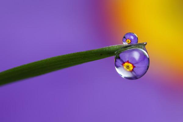 花與露珠8