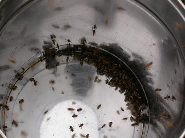 060507蜜蜂也瘋狂.JPG