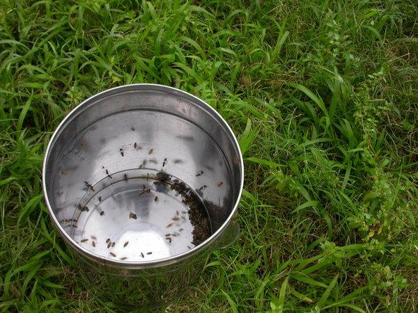 060507蜜蜂也瘋狂 (6).JPG