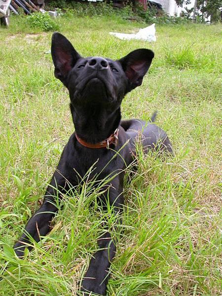 黑皮的小狗們060521 (49).JPG