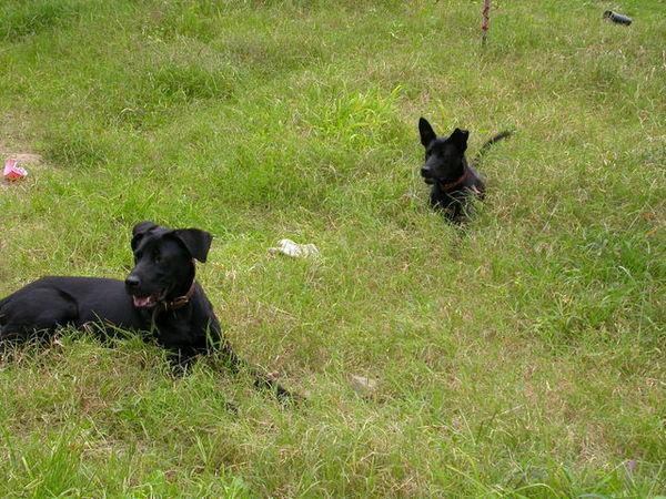 黑皮的小狗們060521.JPG