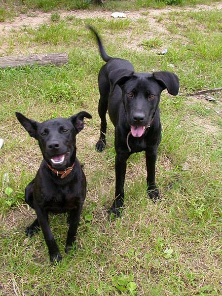 黑皮的小狗們060521 (5).JPG