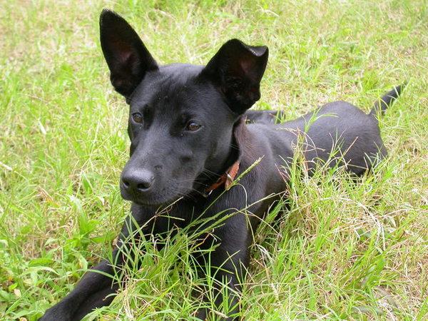 黑皮的小狗們060521 (33).JPG