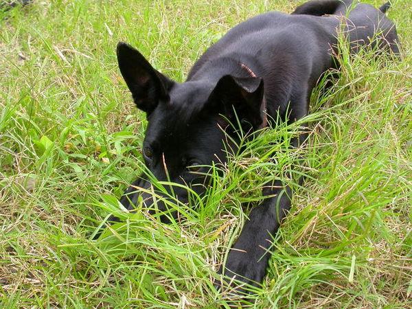 黑皮的小狗們060521 (47).JPG