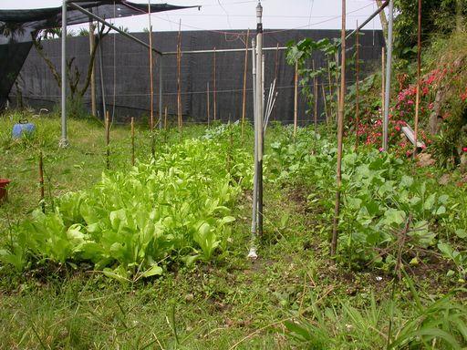 tn_061015辣椒與蔬菜.JPG