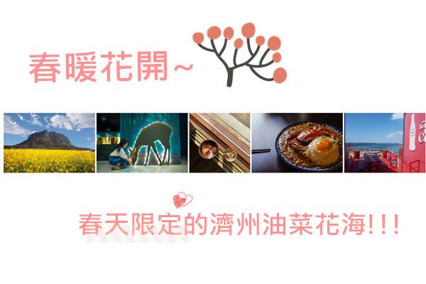 春暖花開~春天限定的濟州油菜花海!!!