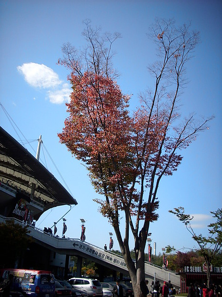 秋楓 藍天 白雲   北國的秋  有點美
