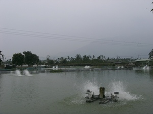 鱸鰻養殖場1030109-4