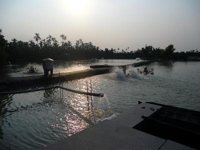 鱸鰻養殖場10212月-5