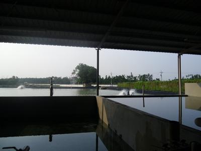 鱸鰻養殖場10212月-3