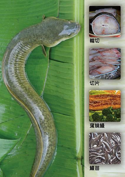 鱸鰻真空包