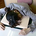 dictionary-desk-pillow-sleep-work-book-1