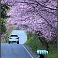 武陵櫻花07.jpg