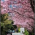 武陵櫻花09.jpg