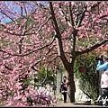 武陵櫻花12.jpg