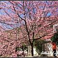 武陵櫻花34.jpg