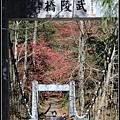武陵櫻花29.jpg
