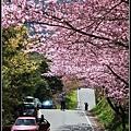 武陵櫻花30.jpg