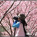 武陵櫻花45.jpg