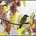 大雪山賞鳥49.jpg